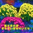 ドーム菊!!